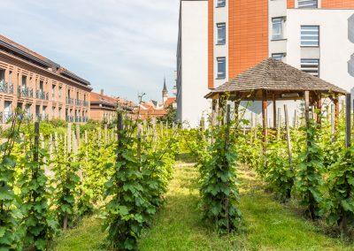 albertov-rental-apartments-areal-cerven-2018-04