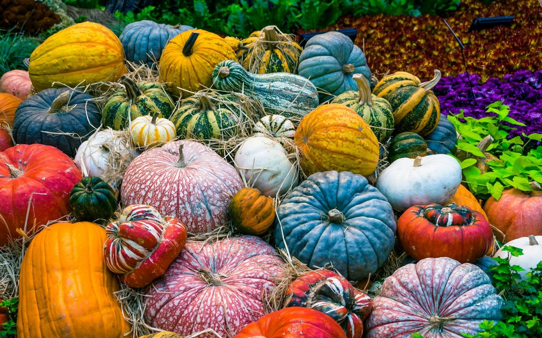 Pumpkin autumn in the Troja Botanical Garden: experience countryside in Prague!